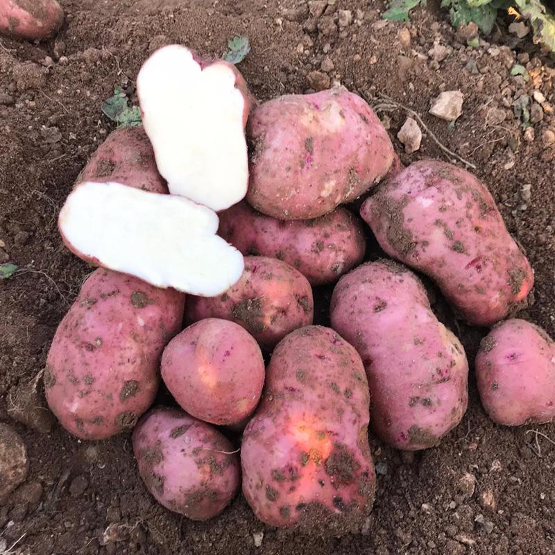 comprar patatas redpontiac