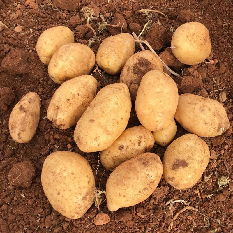 Comprar patatas Fábula